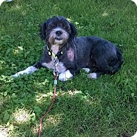 Adopt A Pet :: Baylee - Albert Lea, MN