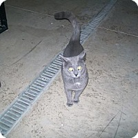 Adopt A Pet :: Marley - Hamilton, ON