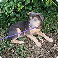Adopt A Pet :: Nick - Lancaster, PA