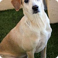 Adopt A Pet :: Joey - Ft. Lauderdale, FL