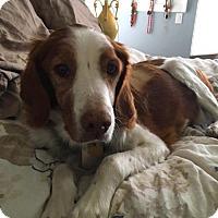 Adopt A Pet :: KS/Riley - St. Louis, MO