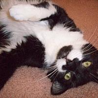 Adopt A Pet :: Tobie - Toledo, OH