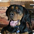 Adopt A Pet :: Pasha