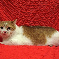 Adopt A Pet :: Samson - Redwood Falls, MN