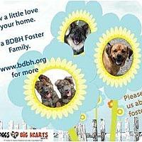 Adopt A Pet :: Foster - Rochester/Buffalo, NY
