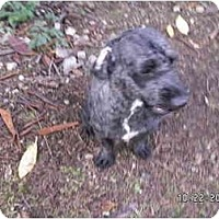 Adopt A Pet :: Monty - Graham, WA