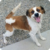 Adopt A Pet :: MOLLY - Valley Village, CA