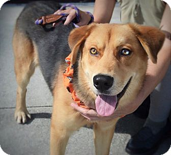 German Shepherd Dog Mix Dog for adoption in Wilmington, North Carolina - Duke