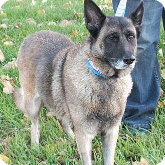 German Shepherd Dog Mix Dog for adoption in Minneapolis, Minnesota - Ramona