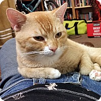 Adopt A Pet :: Chester - Arlington/Ft Worth, TX