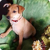 Adopt A Pet :: Cupid - Sacramento, CA