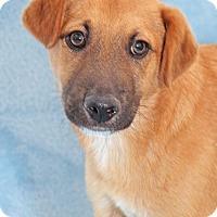 Adopt A Pet :: Tidy Tips - Encinitas, CA
