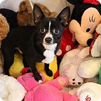 Adopt A Pet :: Bennett - Frankfort, IL