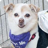 Adopt A Pet :: Sushi - San Marcos, CA
