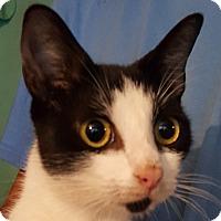 Adopt A Pet :: Aurora - Colonial Heights, VA