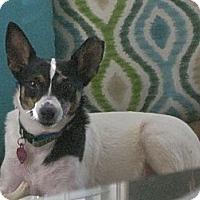 Adopt A Pet :: Cheyenne - Hagerstown, MD