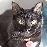 Adopt A Pet :: Kit - Grand Rapids, MI