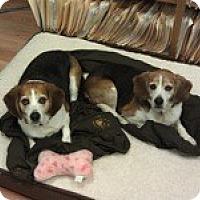Adopt A Pet :: Strider - Minnetonka, MN