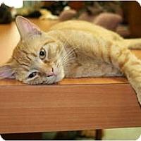 Adopt A Pet :: Peaches - Naples, FL