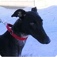 Adopt A Pet :: Pilot - Fremont, OH