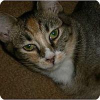 Adopt A Pet :: Zena - lake elsinore, CA