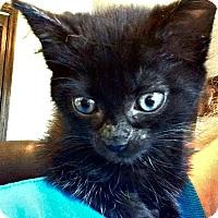 Adopt A Pet :: Jojo - Jefferson, NC