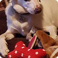 Adopt A Pet :: Atticus - Acushnet, MA