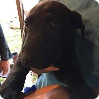 Adopt A Pet :: Zack - Bernardston, MA