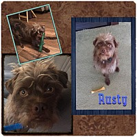 Adopt A Pet :: Rusty - Fort Wayne, IN