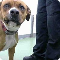 Adopt A Pet :: URGENT 5/1 @ DEVORE - San Bernardino, CA