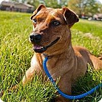 Adopt A Pet :: Pistol Annie - Shelbyville, KY