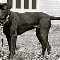 Adopt A Pet :: Lindee - Hastings, NY