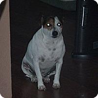 Adopt A Pet :: Roman in Houston - Houston, TX