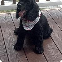 Adopt A Pet :: Truffle - Madison, WI