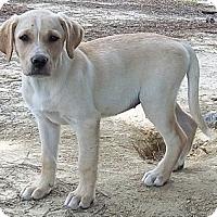 Adopt A Pet :: Bayley - Adamsville, TN