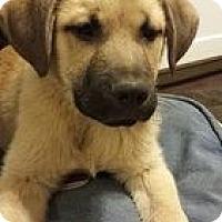 Adopt A Pet :: Stan - New Boston, NH
