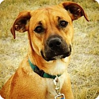 Adopt A Pet :: Skyla - Cheyenne, WY