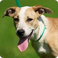 Adopt A Pet :: Crickett - Providence, RI