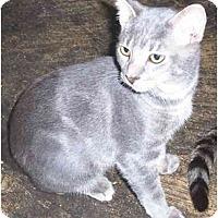 Adopt A Pet :: Lil' B - Goldsboro, NC