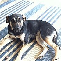 Adopt A Pet :: Sadie - Homewood, AL