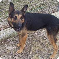 Adopt A Pet :: Scout - Oberlin, OH