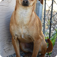 Adopt A Pet :: Squizzy - Acton, CA