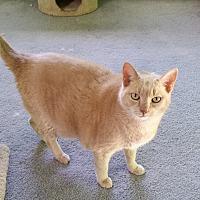Adopt A Pet :: Leonidas - Carlisle, PA