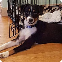 Adopt A Pet :: Bingo - ROME, NY