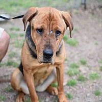 German Shepherd Dog Mix Dog for adoption in Atlanta, Georgia - YOLANDA