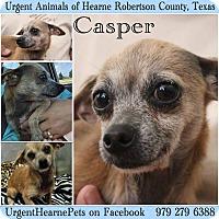Adopt A Pet :: Casper - Hearne, TX