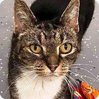 Adopt A Pet :: Tracy - PetSmart - Kalamazoo, MI