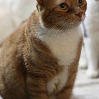 Adopt A Pet :: Tammy - Bronx, NY