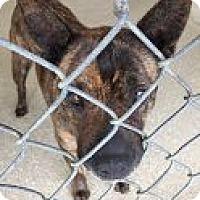 Adopt A Pet :: Jipsi - Encinitas, CA