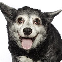 Adopt A Pet :: Cali - oakland park, FL